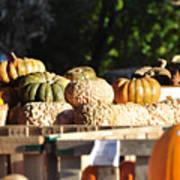Wart Pumpkins Poster