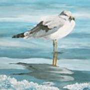 Wary Seagull 2 Poster