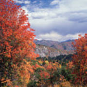 212m45-wasatch Mountains In Autumn  Poster
