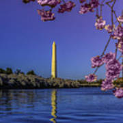 Washington Reflection And Blossoms Poster