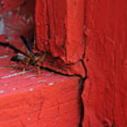 Wasp And Red Poster