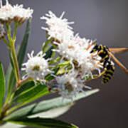 Wasp Closeup Poster