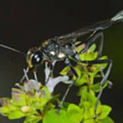 Wasp Visit Poster