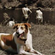 Watchdog Poster