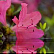 Water Azalea Poster