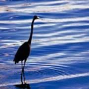 Water Bird Series Poster