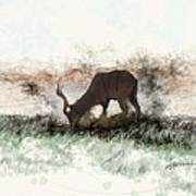 water buck in Addo Park S.A. Poster