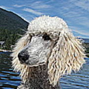 Water Dog Poster