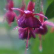 Water Drop Monets Garden Poster