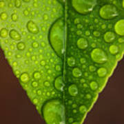 Water Droplets On Lemon Leaf Poster