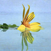Water Flower Poster