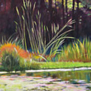 Water Garden Landscape Poster
