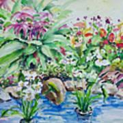 Water Garden Poster