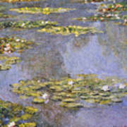 Water Lilies 8 Poster