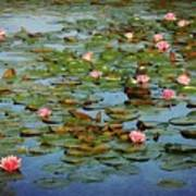 Water Lily Ballet Poster
