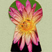 Water Lily Keyhole Poster