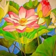 Water Lily Lotus Poster