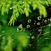 Water Orbs In Cobweb. Poster