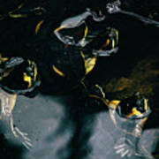 Water Turtles Poster