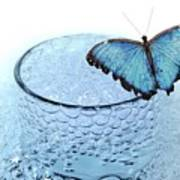 Water With Butterfly Poster