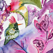 Watercolor - Frilled Coquette Hummingbird With Colorful Background Poster