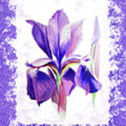 Watercolor Iris Painting Poster