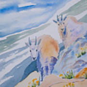 Watercolor - Mountain Goats On Quandary Poster