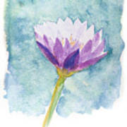 Watercolor Of Lotus Flower. Poster