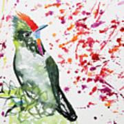 Watercolor - Rainbow Bearded Thornbill Poster
