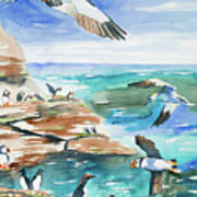 Watercolor - Seabirds Of The North Atlantic Poster