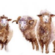 Watercolor Sheep Poster