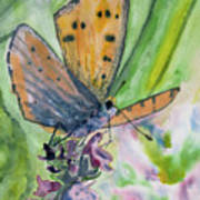 Watercolor - Small Butterfly On A Flower Poster