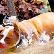 Waterdog Poster