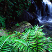 Waterfall El Yunque National Forest Poster