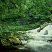 Waterfall In Hemlock Forest Poster