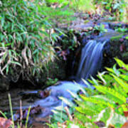 Waterfall In The Fern Garden Poster