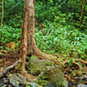 Waterfalls And Banyans Poster