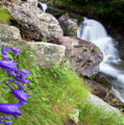 Waterfalls And Bluebells Poster