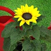 Watering With Sunflower Poster
