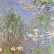 Waterlilies, Cluster Of Grass Poster