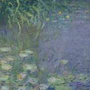 Waterlilies Morning Poster