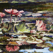 Waterlilies Tower Grove Park Poster