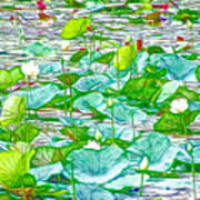Waterlily Blossoms On The Protected Forest Lake Poster