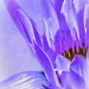 Waterlily Dreams Poster