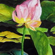 Waterlily Watercolor Poster
