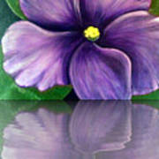 Watery African Violet Reflection Poster