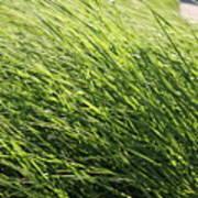 Waving Grass Poster