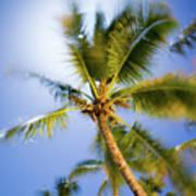 Waving Palm Poster