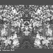 Waxleaf Privet Blooms In Black And White Abstract Poster Poster