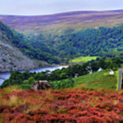 Way Home. Wicklow. Ireland Poster
